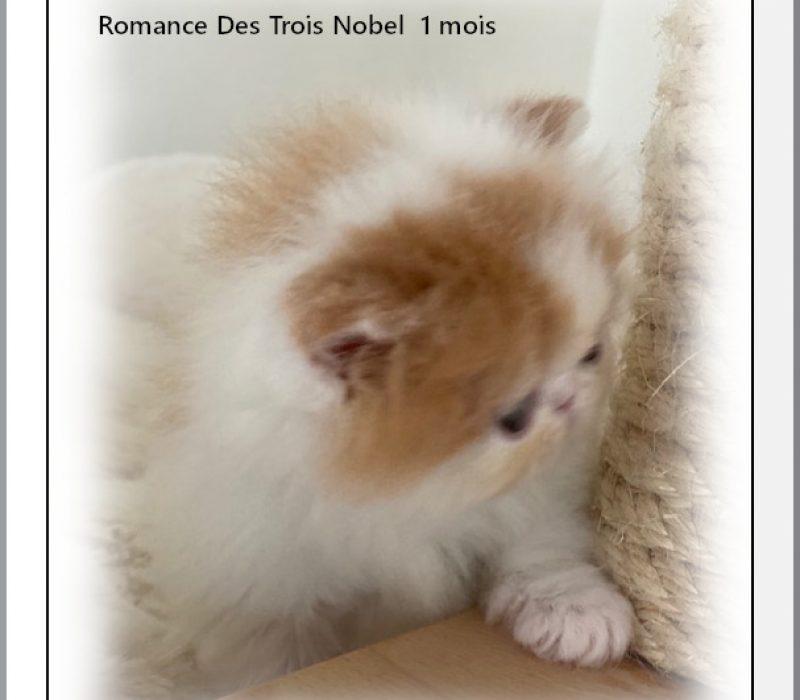 Romance-1-mois-3